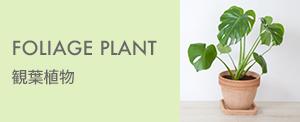 FLIAGE PLANT